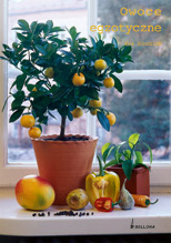 owoce-egzotyczne